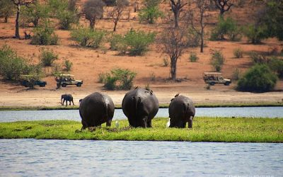 Exploring Chobe National Park – On Safari in Botswana