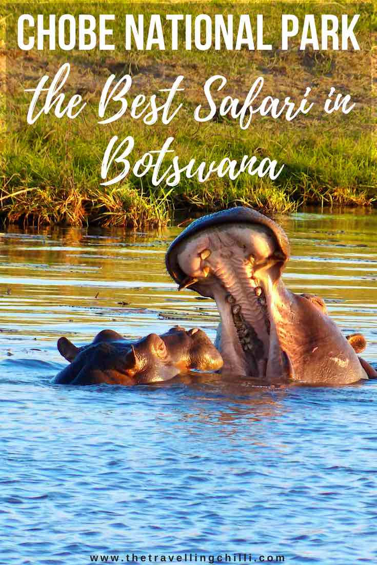 Chobe National Park the best safari in Botswana