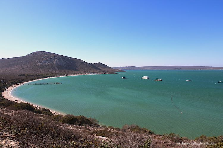 best beaches in South Africa to visit Kraalbaai West Coast National Park