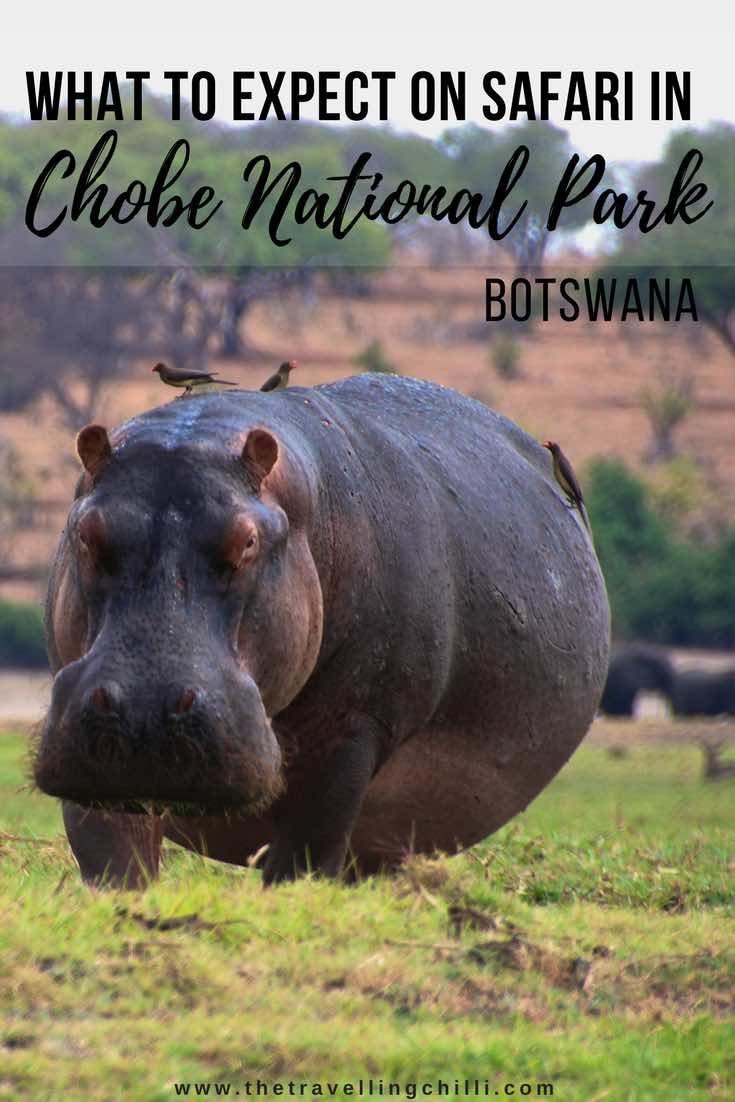 What to expect on safari in Chobe National Park in Botswana