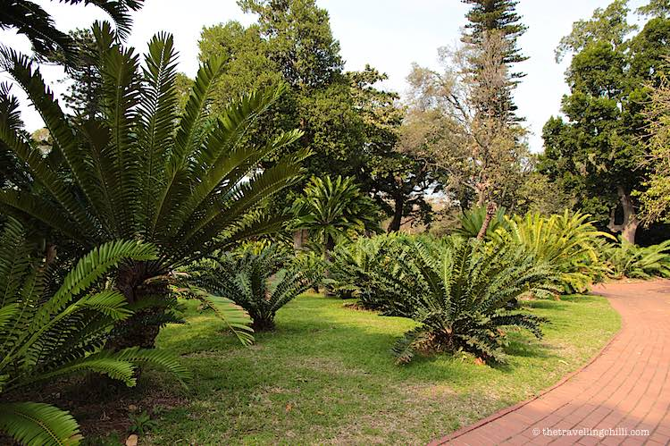 Things to do in Durban under R100 | Cycads Durban botanic garden
