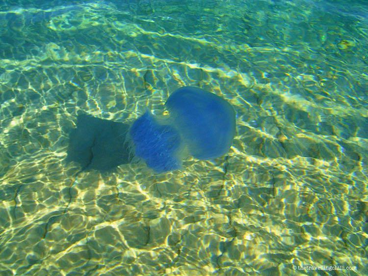 Marine life jellyfish Mozambique