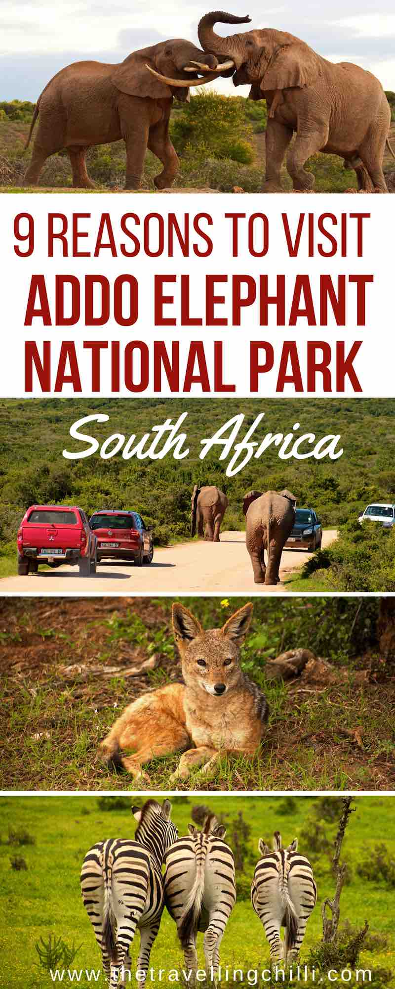 Best reasons to visit Addo Elephant park in South Africa. Addo park is close to Port Elizabeth as part of the Garden Route in South Africa. Addo national park is the best place to see the African elephant and of course many other wildlife in South Africa | safari in Addo Elephant park