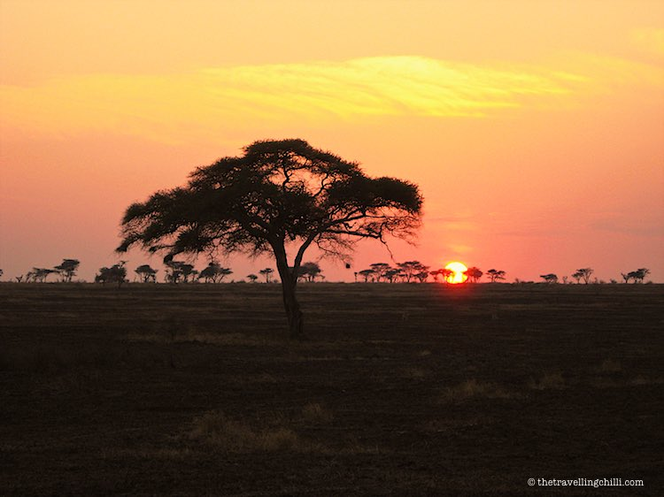 Silhouette of an Acacia tree in the African sunset of the Serengeti National Park in Tanzania