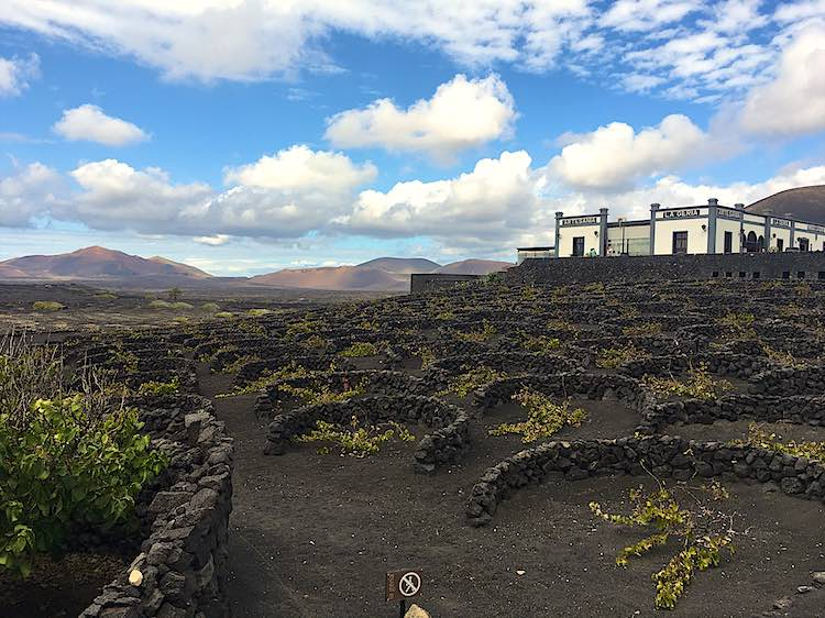 Wineries Lanzarote vineyards | Volcanic vineyards Lanzarote Canary Islands