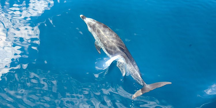 Whale Dolphin watching in Tenerife Spain Canary Islands
